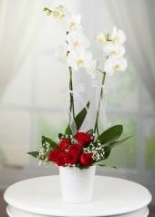 Çiftli Orkide Ve Gül