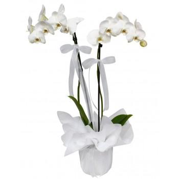 Orkide Kadar Güzelime