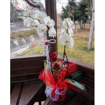 Güllü Çift Dal Orkide