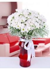 Vazoda Beyaz Kasımpatı