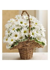 Isparta Çiçek Sepeti