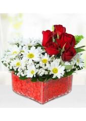 Güller ve Papatya